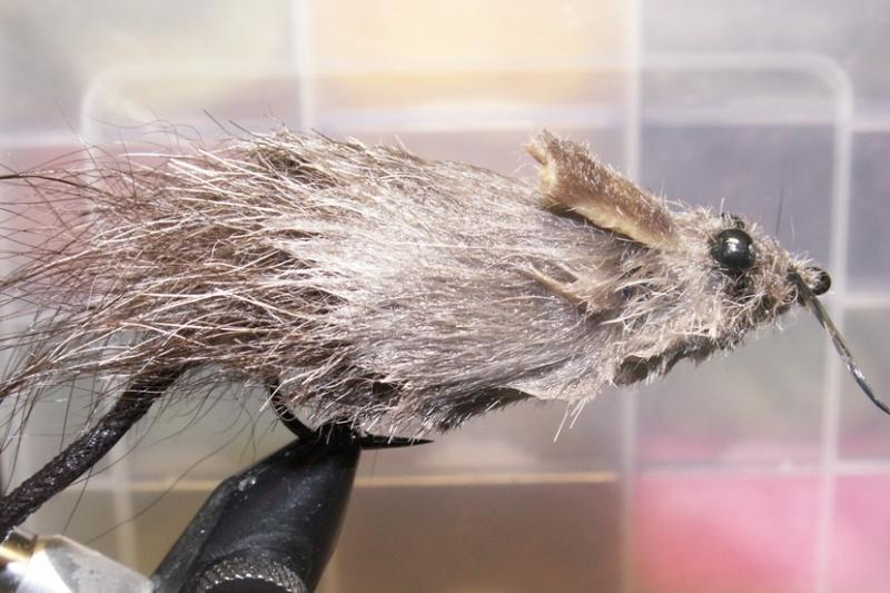 Мышка Соня